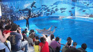 Barcelona_zoo